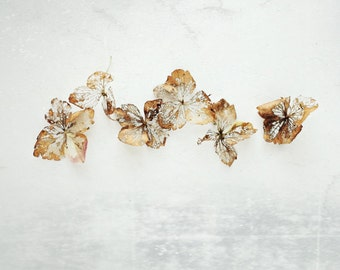 "Modern rustic botanical print white gold hydrangea flower still life neutral naturalist rustic minimal photography ""Gold Filigree"""