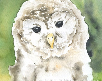 Barred Owl Watercolor Painting Giclee Print 11x14