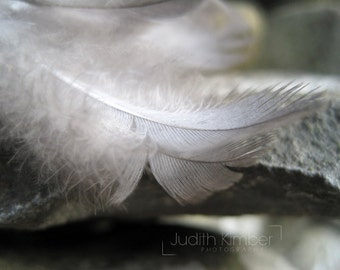 Feather Print - Angel Feathers Fine Art Photograph -  Guardian Angel Photography - 8x10