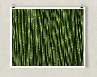 SNAKE GRASS - 8x10 Signed Fine Art Photograph