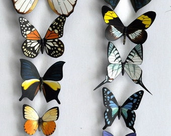 Butterfly Moth Magnets, Rainforest Butterflies, Set of 12 Insects Refrigerator Magnets, Kitchen Magnets