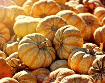 Herbst Natur Fotografie - gestreiften Kürbisse - 8 x 10 oder 11 x 14 Fine Art print - orange-gelb gestreifte Kürbisse Sonnenlicht rustikale Wohnkultur
