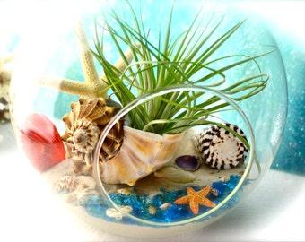 """Island Beach Terrarium Kit ~ 8"""" Air Plant Terrarium Kit ~ Beautiful Busycon Sea Shell ~ Starfish ~ Coastal Living Beach Decor ~ Beach Gift"""