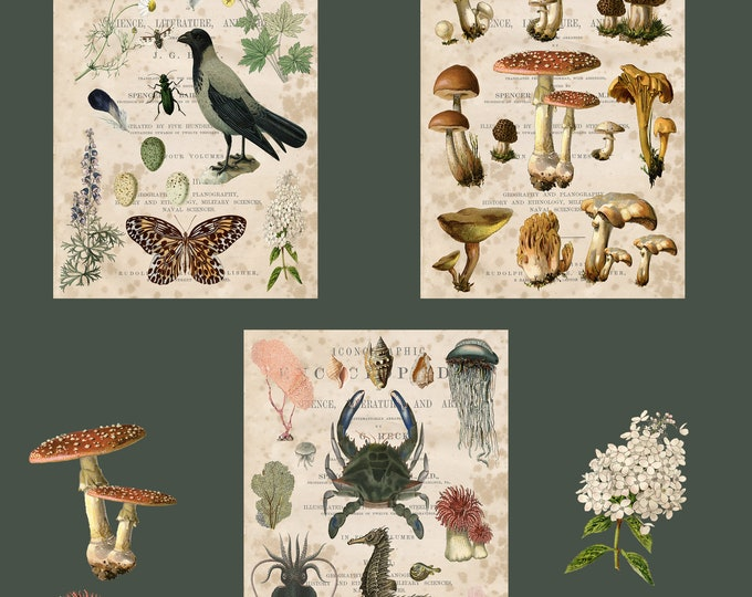 Woodland Prints, Nature Prints, Specimens, sea life, mushrooms, birds, gift, ephemera, butterfly, instant download, nature study, botanical