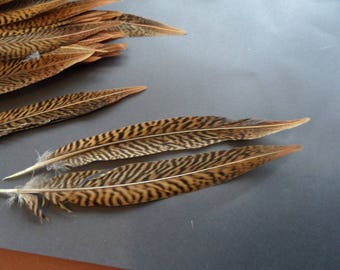 2 trigrees 25 at 28cms, Golden Pheasant tail feathers.