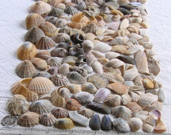 167 Natural Sea Shells Shell Fragments Art Mosaic Craft Supplies (1730)