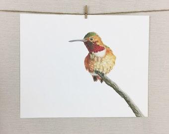 Allen's Hummingbird 8x10 Print