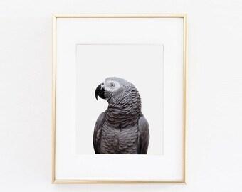 Parrot Nursery Art Print | Parrot Wall Art | Nursery Printable | Nursery Wall Art | Bird Art Print | Bird Wall Art | Bird Nursery Print |