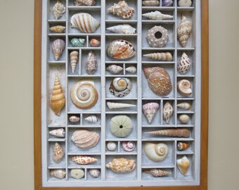 Mixed media assemblage, seashell art, seashells in relief, hieroglyphic shells, seashell composition, seashell collection