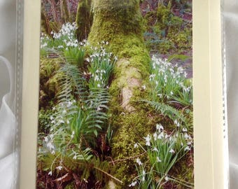 Snowdrop Valley Somerset, Snowdrops, Spring, Flowers, Woodland, Blank Card, Nature,