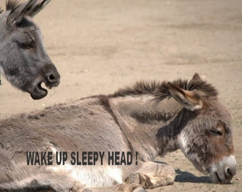 "Humorous Donkey Instant Digital Download Photography "" Wake Up Sleepy Head ! "" # 1"