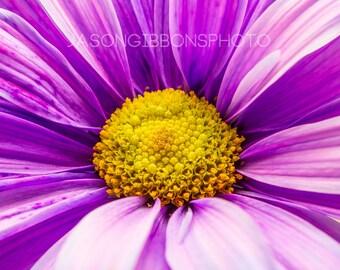 Purple Flower Photography, Wall Art, Home Decor, Close Up, Flower, Purple