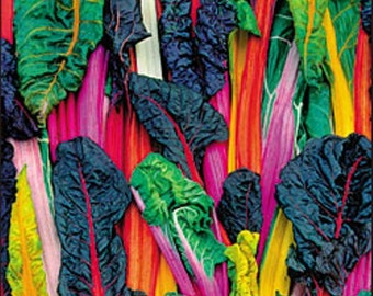 Five Color Silver Beet Australian Heirloom Swiss Chard Seeds Non-GMO Naturally Grown Open Pollinated Gardening