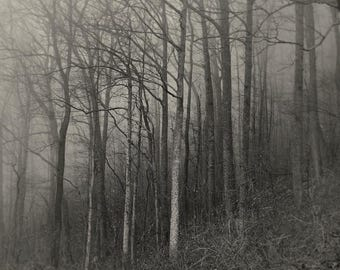 tree photography, forest photography, Appalachia, woodland photography, trees, black and white photography, landscape photography, fog
