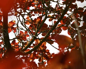 Red Tree - Digital Download - Photography by GemShort Photography
