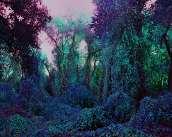 Purple Magical Fairy Forest, a Path Through the Woods Into the Blue & Green Forest, Lavender Sky, Surreal Wall Art, 8 x 10 Lustre Print