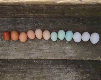 12 Blown Eggs from Free Range Chickens Ducks Geese, Hand Blown Eggs, Easter Decorations, Decorated Eggs, Easter Eggs