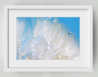 Photograph of dandelion and small Teardrop - dandelion art - art blue sky - 12 x 16 inches macro photo