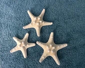Starfish Off-white Knobby