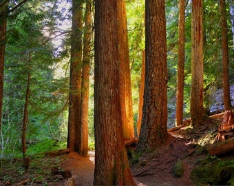 Oregon Woods photo, HDR photograph, Orange, green, brown, fine photography prints, Wooden Warmth