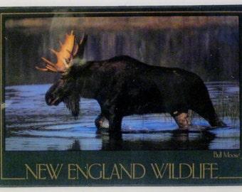 Bull Moose New England Wildlife Refrigerator Magnet