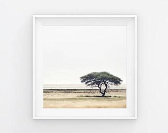 Road Less Traveled II Tree Photography Print