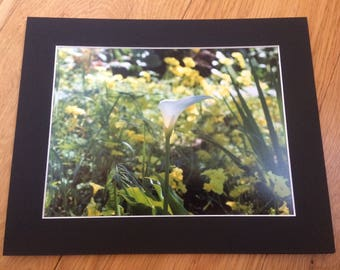 "Serene Green - Wildlife Photo Print (8"" x 6"")"
