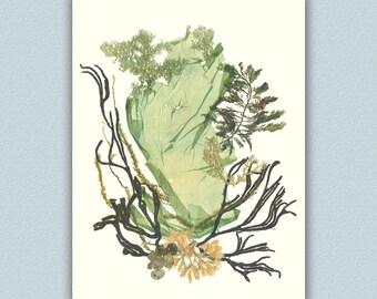Seaweed art, Natural pressed seaweed, Original collage seaweed pressing, Botanical seaweed artwork, beach cottage decor, Victorian art