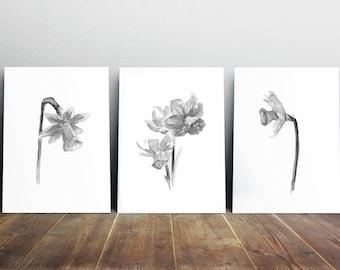Daffodil Art - daffodil painting - print set - black white gray flowers - flower decor - flower art - zen art - daffodil