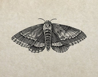 80% OFF - Moth (Image 9a) - PNG / JPG Digital Image Download - Transfer / Iron on / Clip-art / Commercial Use