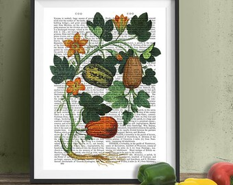 Foodie gift - Squash Vine 1 - Botanical wall art Rustic kitchen decor Food art Country kitchen decor Gift for chef Gastronomy gift Chef gift