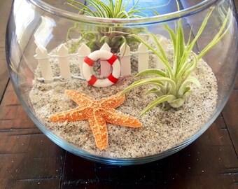 Air Plant Terrarium, Beach Terrarium, Glass Terrarium, Birthday Gift, Desk Warming Gift, Nautical Decor, Airplants