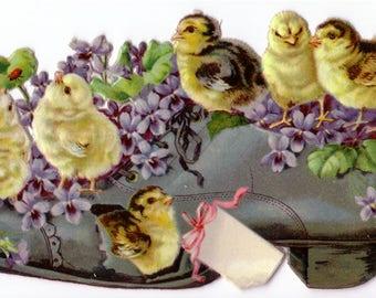 Victorian Baby Chicks