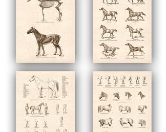 Horse Print  Antique Print Equestrian Prints, set 4 Prints 14x11, country cottage decor, rustic cottage decor