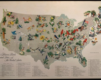 State Flower Map Bird Map United States Tree 1940s Original