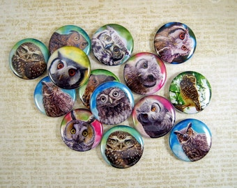 Colorful Owls Flatback Buttons, Pins, Magnets 12 Ct.