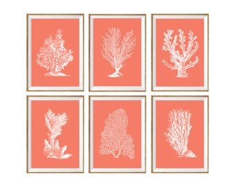 Coral Art Print SET of 6. sea coral poster, beach house poster, coastal posters, marine life poster, sea life posters, nautical coral poster