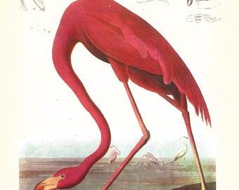 Flamingo Audubon print - Florida Scenery  framable print - 8 by 10 in for beach decor, bird print, swamp creatures, 1930s retro aviary