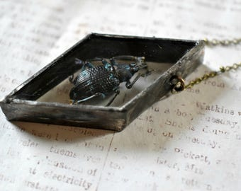 Beetle Necklace Shadow Box Necklace Insect Jewelry Taxidermy Beetle Pendant Soldered Pendant Macabre Jewelry Terrarium Jewelry Unique