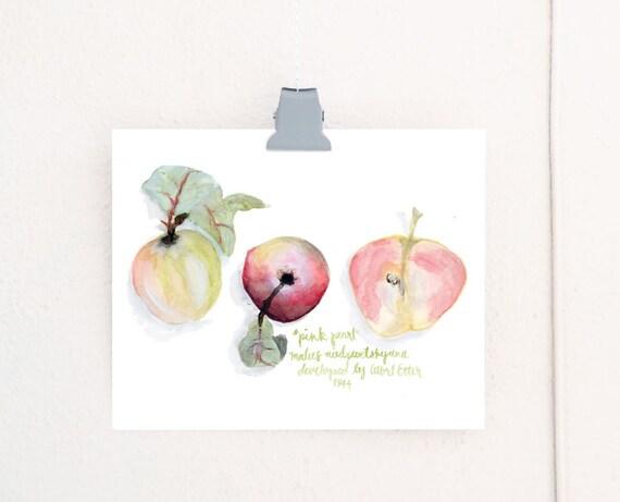 Pink Pearl Apple art print of an original watercolor illustration