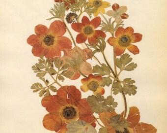 Antique Pressed Flowers Print, Rose of Shannon, Orange Rose Flower Art, Vintage Floral Art Print, Victorian Woodland