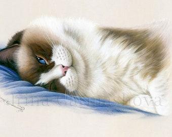 Ragdoll Cat Print Time To think by Irina Garmashova
