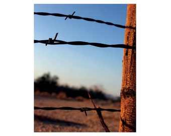 Barbed Wire Art / Barbed Wire Decor - Fence Art - Rustic Photography / Country Photography - Fence Decor