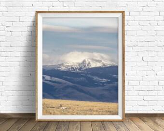 "landscape photography, large art, large wall art, instant download, instant download printable art, mountains, animal prints - ""Wild Days"""