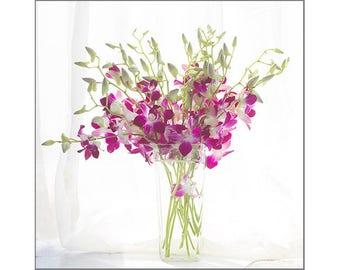 Orchid Wall Art, Flower Still Life Photography, Magenta White Print, Modern Art, Floral Art Print, Gift for Her