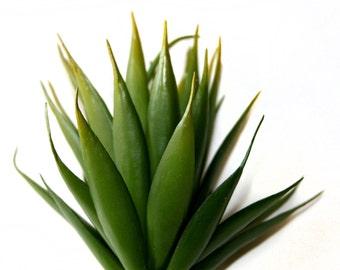Faux Succulent in Green - Artificial Succulents- Pachypodium