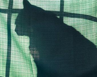 Cat photo, cat print, cat pictures, cat lover gift, cat wall decor, cat lover, cat art, cat, cat art print, cat wall art, I love cats