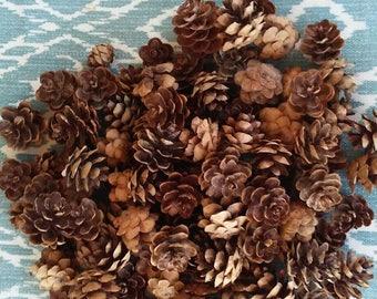 100 Mini Pinecones