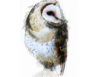 Barn owl | Limited edition fine art print from original drawing. Free shipping.