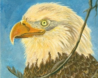American Bald Eagle Limited Edition Aceo